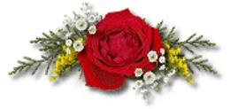 vendredi 12 octobre 1_rose10