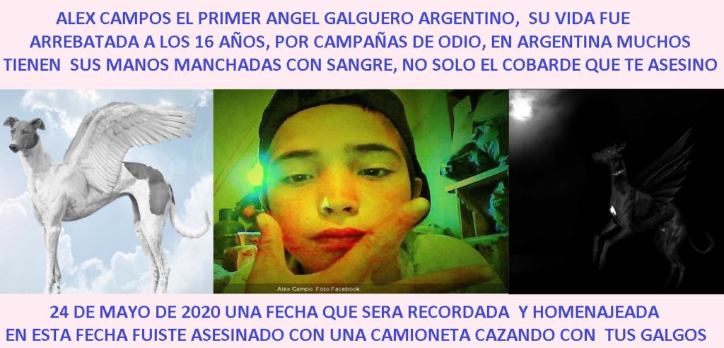 Foro gratis : CARRERAS DE CABALLOS Y GALGOS EN CHILE - Portal Portad11