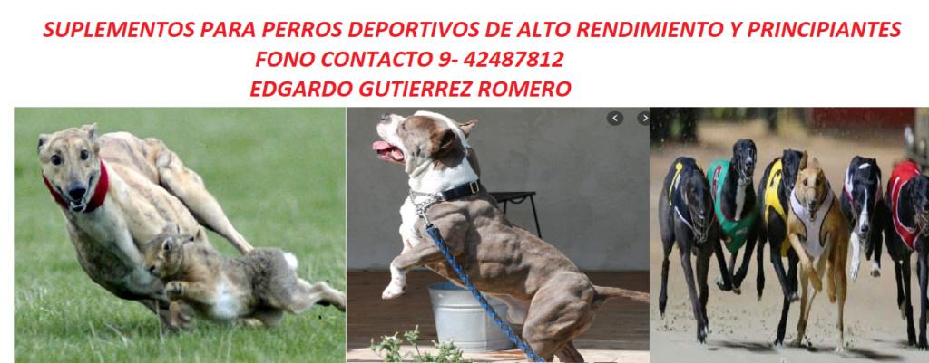 SUPLEMENTOS DEPORTIVOS   POR MAYOR Y MENOR PARA GALGOS Suple_11