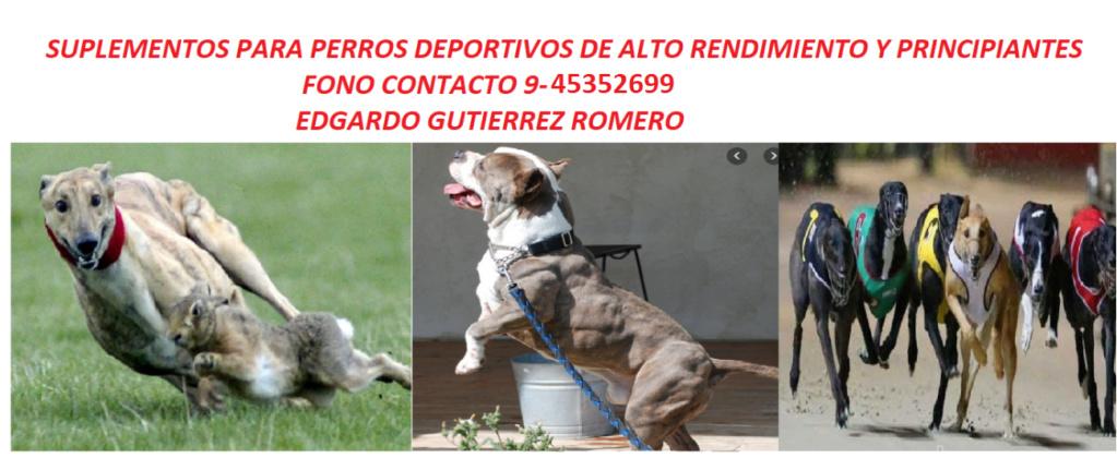 Foro gratis : CARRERAS DE CABALLOS Y GALGOS EN CHILE - Portal Venta_11