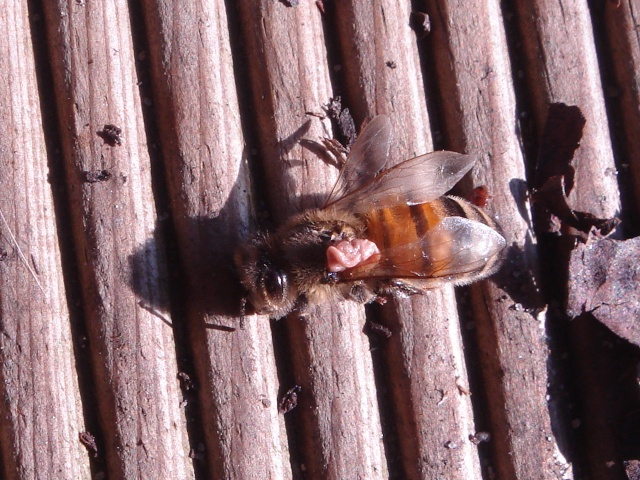 HELP!!!!une ruche sur un toit...........la saga! - Page 3 Zaza_f10