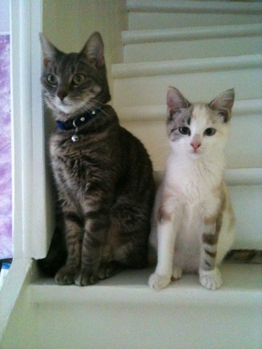 Clochette et Kahuèt....les matous de maman Liloo ! 77192_10