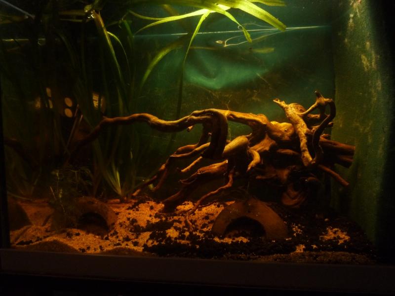 aquarium 100l (Dorian34*) Bac_ap10