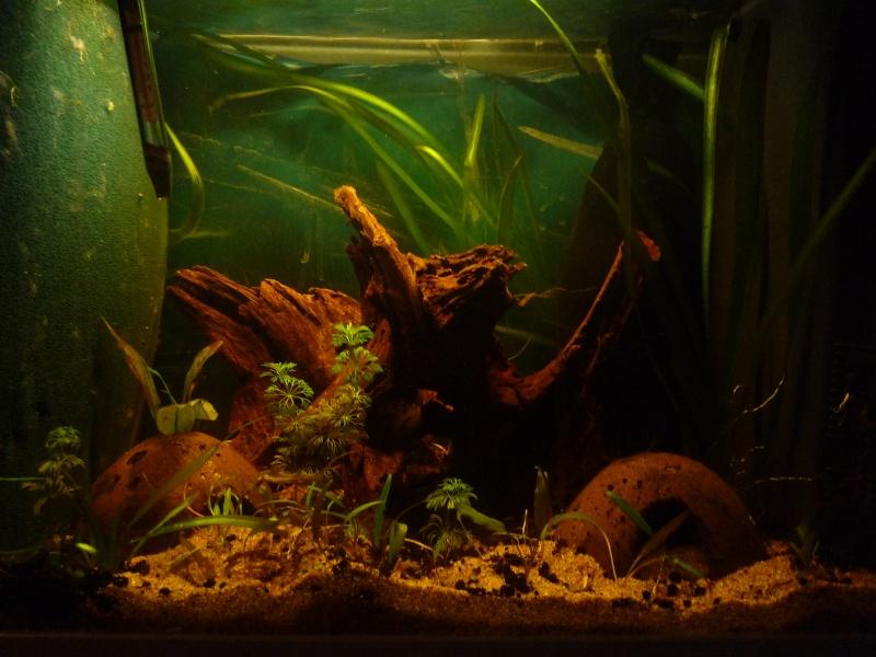 aquarium 100l (Dorian34*) Bac_ap12