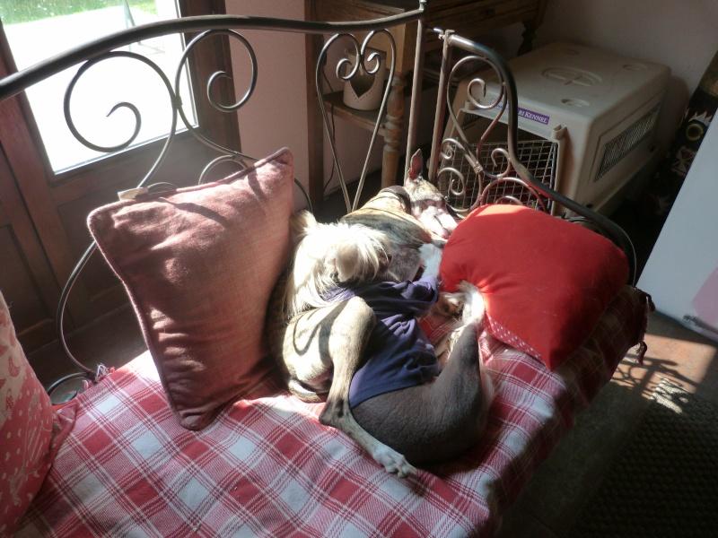 Posture originale pour dormir....et chez vous c'est comment??? - Page 3 Maison17