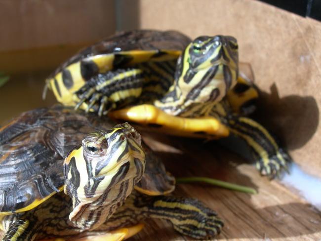 notre bassin pour tortues... Dscn8210