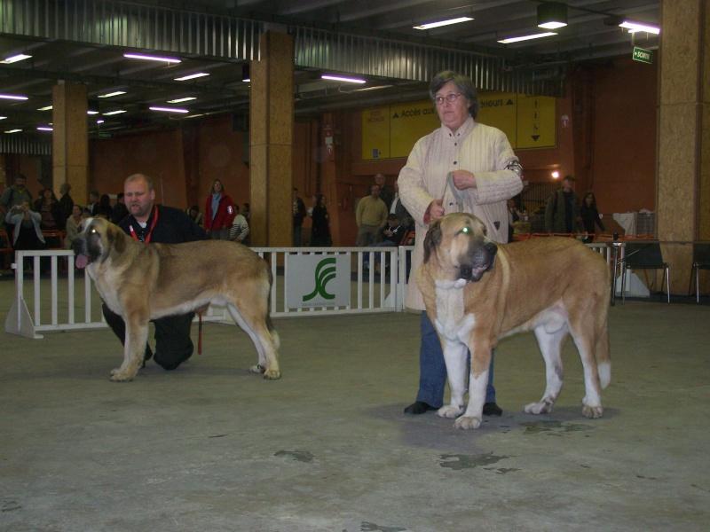 autour du ring Nantes octobre 2008 100_3814