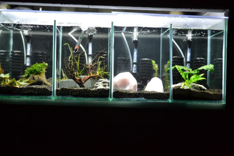 aquarium encastrer et cloisonner - Page 2 Dsc_0210