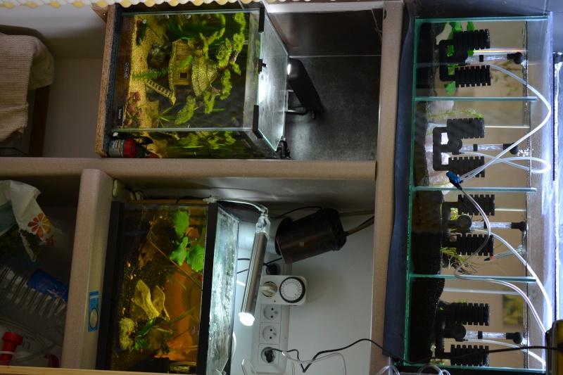 aquarium encastrer et cloisonner - Page 2 Dsc_0213