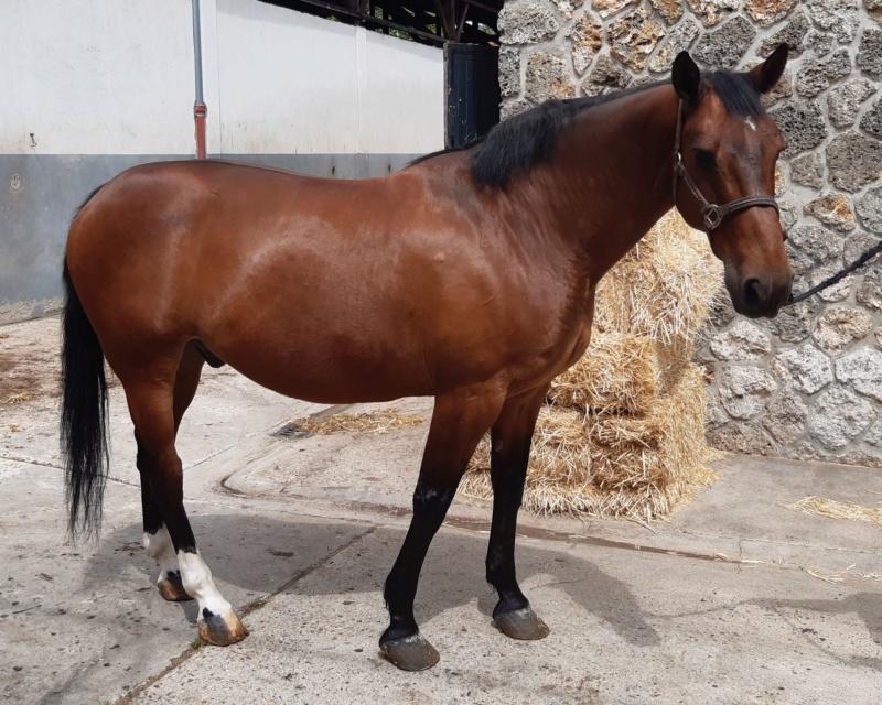 (78) OUGLOF - SFA né en 2002 - 306 € + don libre 20200511