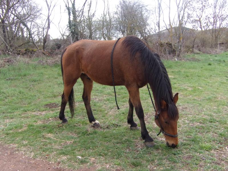 VOYOU - TF né en 2009 - adopté en mai 2011 par Elisabeth 310