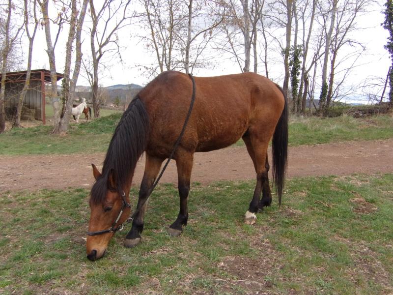 VOYOU - TF né en 2009 - adopté en mai 2011 par Elisabeth 410