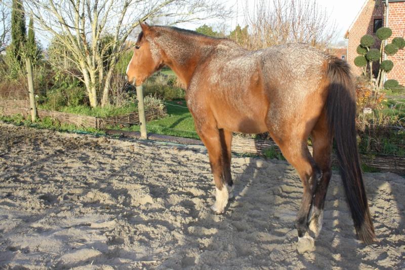 GRIDY - TF né en 1994 - adopté en octobre 2010 49026412