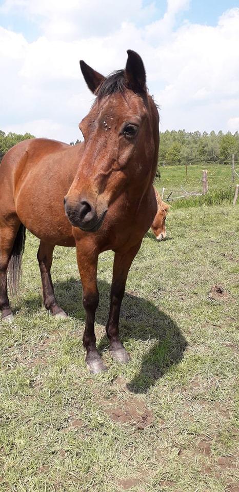 IRAK - OI Poney né en 1996 - adopté en juin 2015 par Justine 59869010