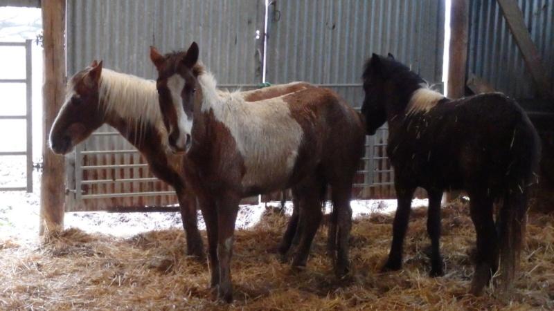 RUMBA, SALSA et HIP-HOP (HIPHOP) : les poneys sauvages entrent dans la danse 89069210