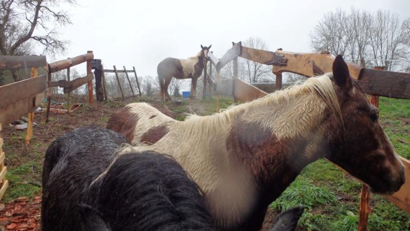 RUMBA, SALSA et HIP-HOP (HIPHOP) : les poneys sauvages entrent dans la danse 89194710