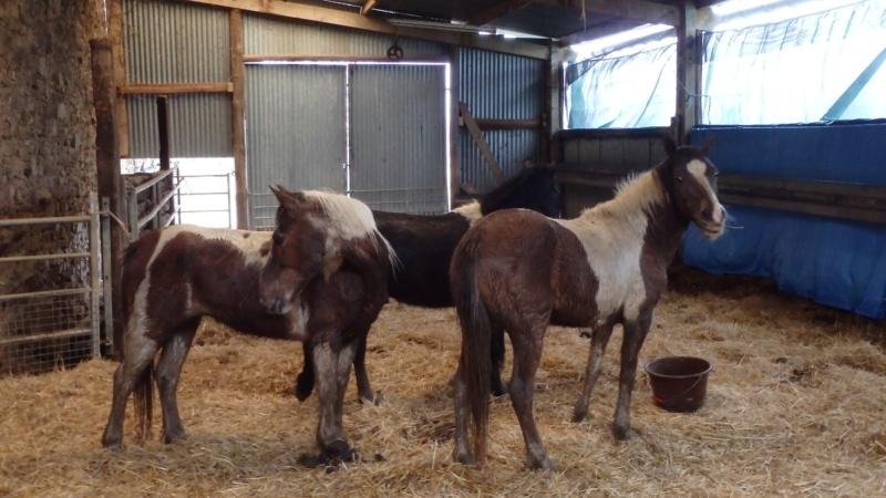 RUMBA, SALSA et HIP-HOP (HIPHOP) : les poneys sauvages entrent dans la danse 89361110