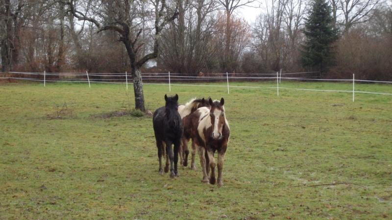 RUMBA, SALSA et HIP-HOP (HIPHOP) : les poneys sauvages entrent dans la danse 89519210