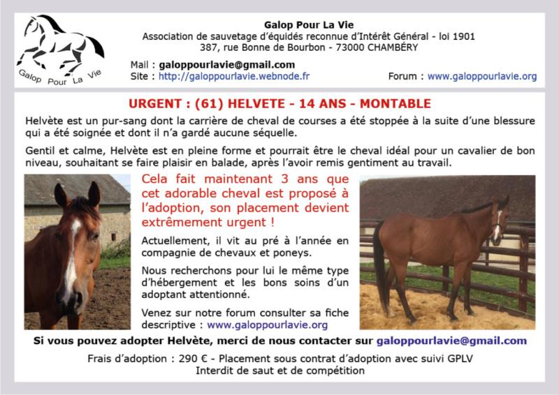 SWISS NOTE (dit TITAN) - PS né en 2004 - adopté en juin 2020 par Marie - Page 2 Affich11