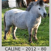 Galop Pour La Vie Caline11