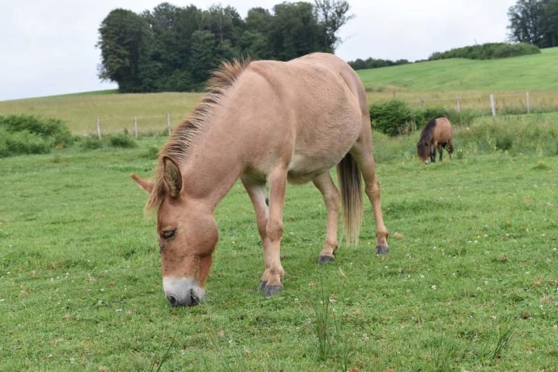 DIABLOTINE - ONC Mule née en 2014 - restée dans sa famille Fb_img15