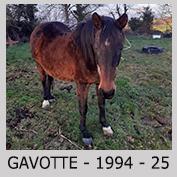 Galop Pour La Vie Gavott13