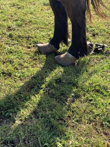 (02) ZEBULON - ONC poney né en 1997 - NON MONTABLE - A ADOPTER (126 € + don libre)   Image119