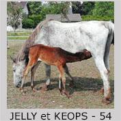 Galop Pour La Vie Jelly10