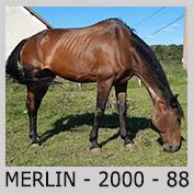 Galop Pour La Vie Merlin10