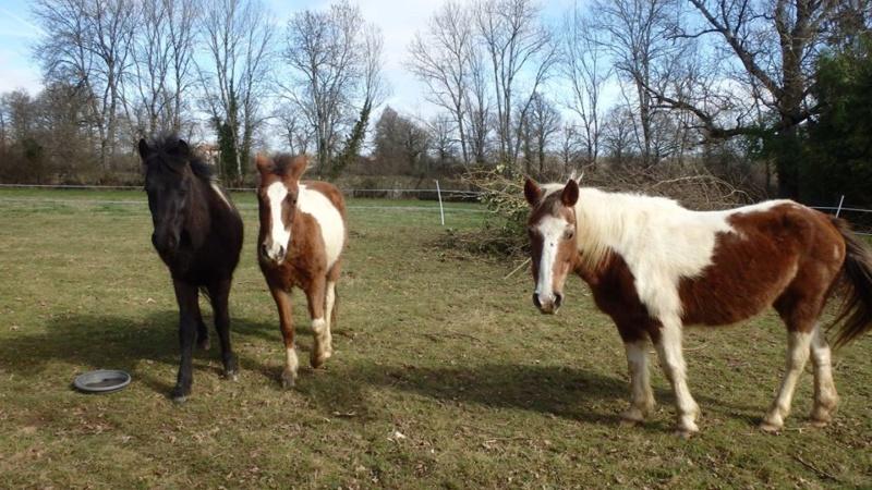 RUMBA, SALSA et HIP-HOP (HIPHOP) : les poneys sauvages entrent dans la danse Mzoziz11