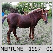 PLACEMENTS / VENTES SOUS CONTRATS Neptun10
