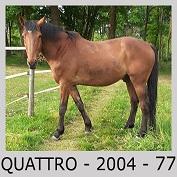 Galop Pour La Vie Quattr11