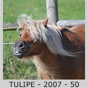 Galop Pour La Vie Tulipe10