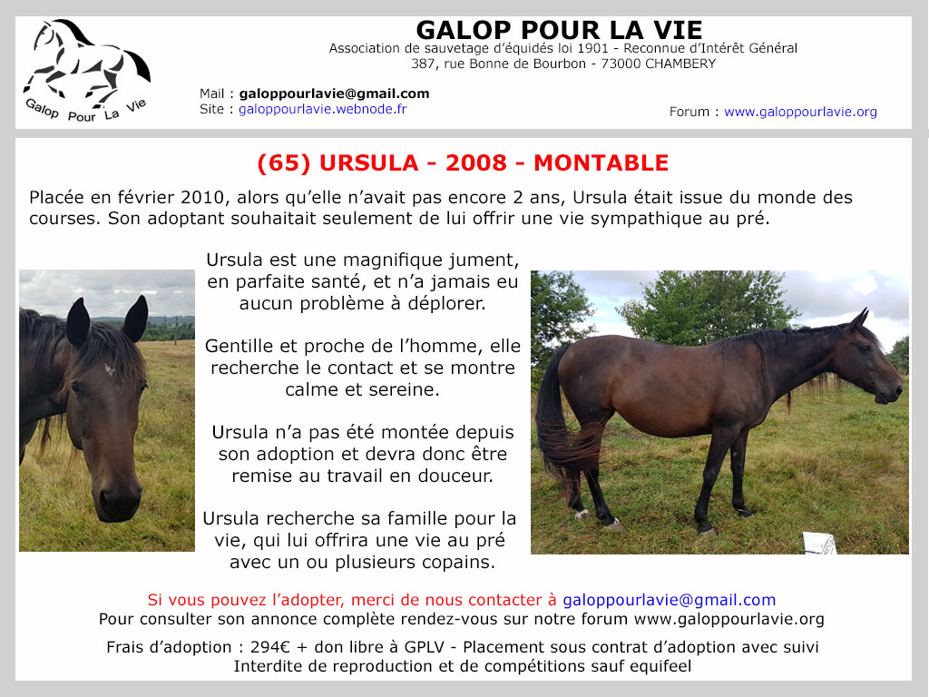 (65) URSULA - TF née en 2008 - 294 € + don libre Ursula11