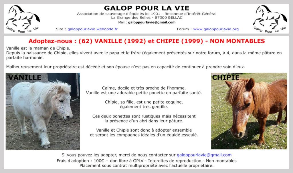 (62) VANILLE (ONC Poney de 1992) & CHIPIE (ONC Poney de 1999) - non montables - 100 € + don libre à GPLV  Vanill12