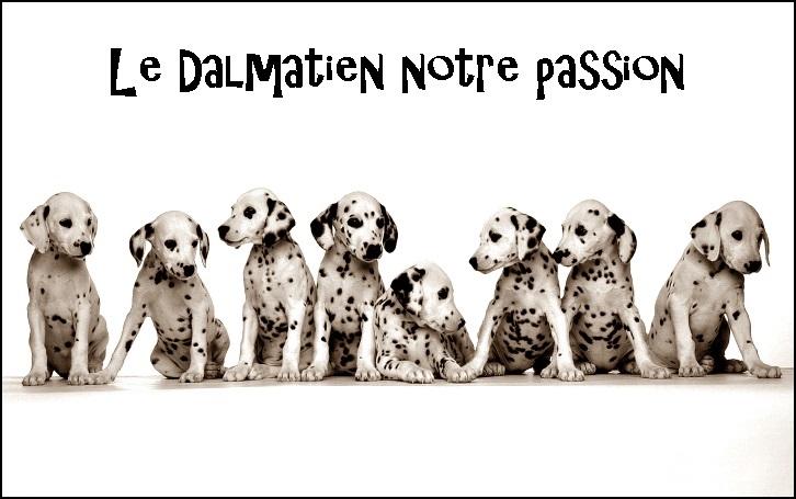 Dalmatien ma passion