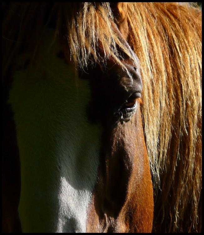 """Concours photo """" oeil de chevaux"""" venez votez ! P1100810"""