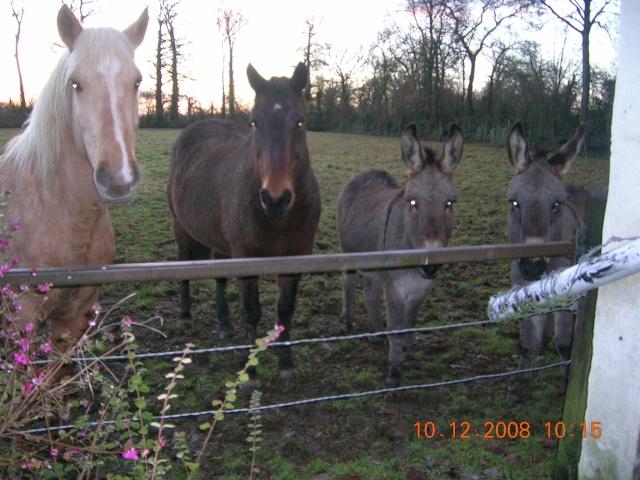 Mon palomino et ses amis que j'aime! Photo_13