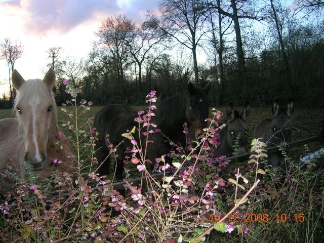 Mon palomino et ses amis que j'aime! Photo_14