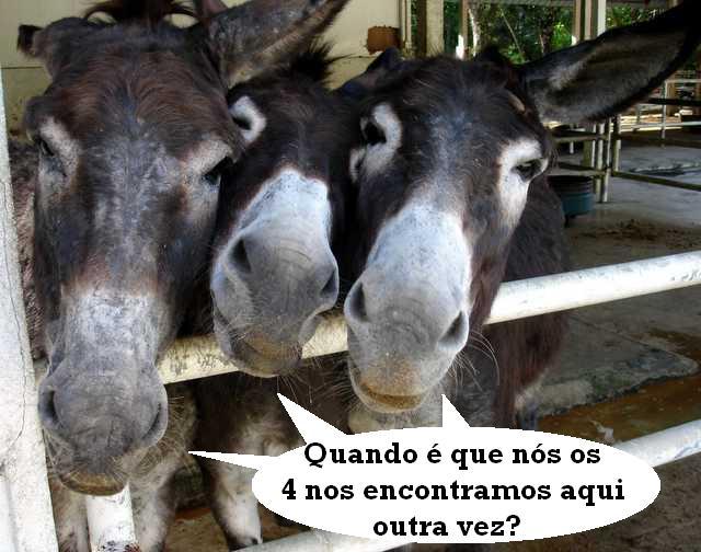 4 burros Eheheh10