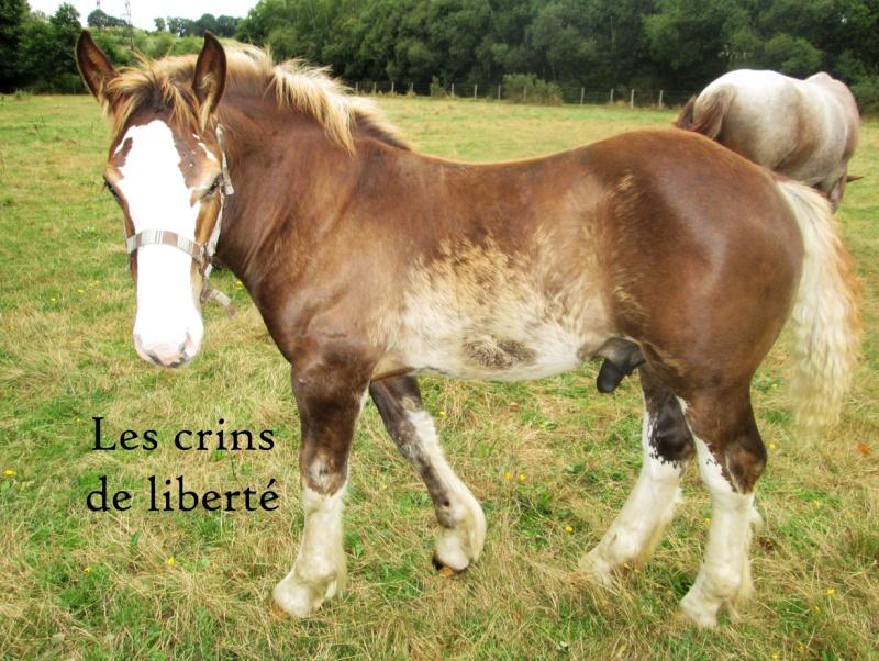 Dpt 35 - Doudou de la rablais - Trait Breton PP - Sauvé par Gaëlle ! (Août 2014) - Page 2 Img_0213