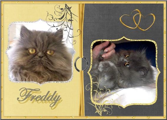 Contre les animaleries INFORMATION/PETITION ( La Liste Freddy ) Scrapf10