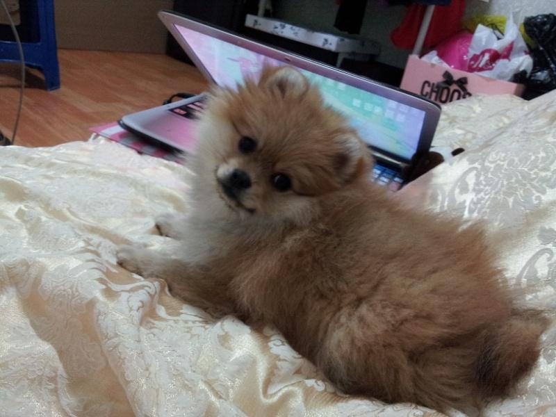 Qu'elle est le nom de vos/votre chien? Et Pourquoi? - Page 2 20130211