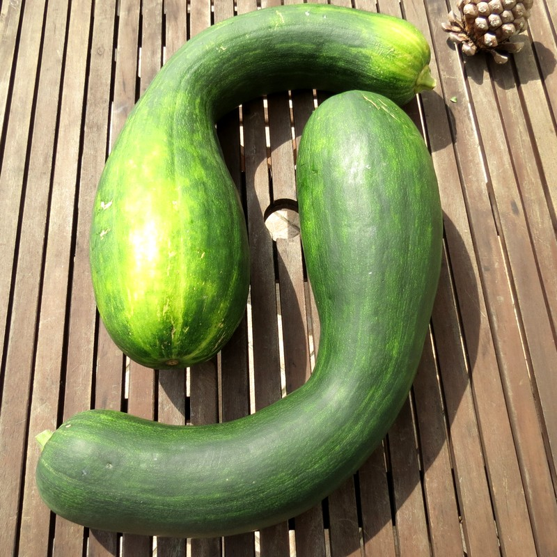 courgettes de nice Cource10