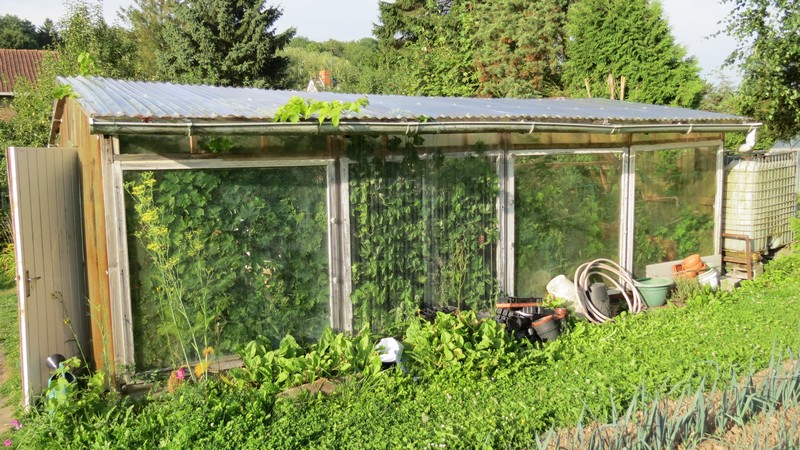 help tomates Serre_11
