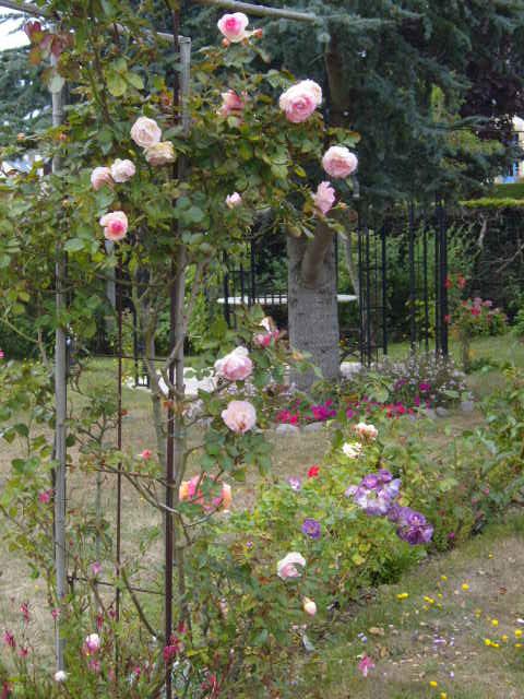 rosiers en aout 2013 Cornic15