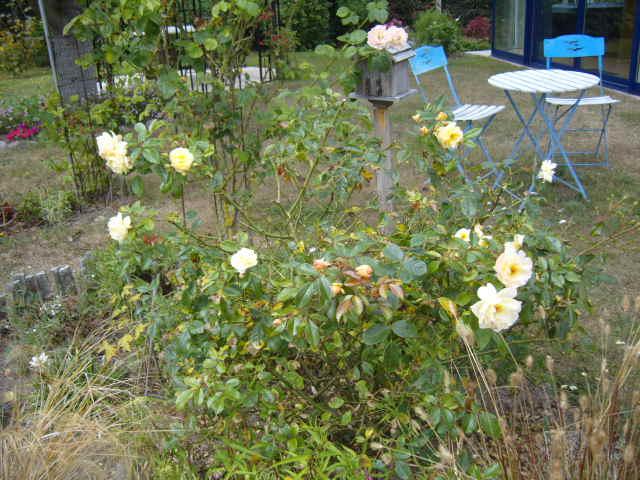 rosiers en aout 2013 Cornic17