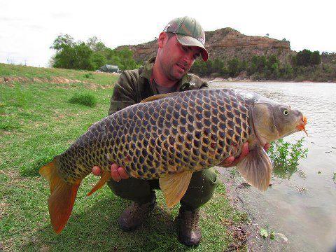 un poisson venu d'ailleurs Carpe_10
