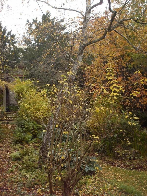 Quelques vues d'automne Copie_11