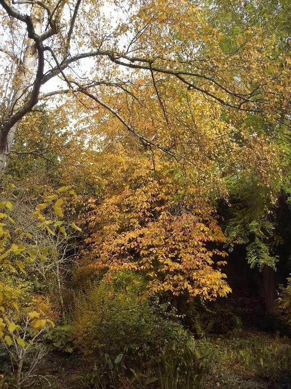 Quelques vues d'automne Copie_12